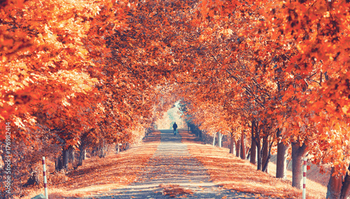 prachtvolle Herbstallee - 176982414