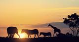 Safari sunset landscape - 176982671