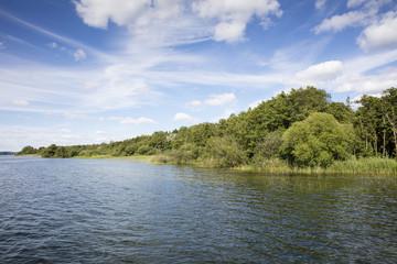 Seeufer, Müritzsee, Müritz-Nationalpark,  Mecklenburgische Seenplatte, Mecklenburg Vorpommern, Deutschland, Europa