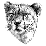 Cheetah head sketch vector graphics monochrome black-and-white drawing - 176987420