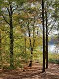 Herbstlandschaft am Liepnitzsee - 176991684