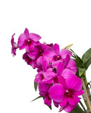 Beautiful purple orchid , Isolated on white background