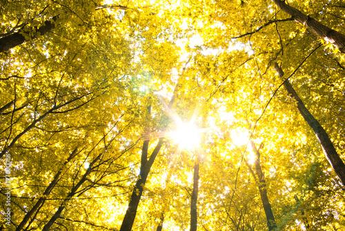 Plexiglas Geel leaves in autumn forest
