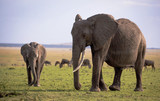 A large female elephant and her calf stand on an open green plain in Kenya's Masai mara with a grazing herd of wildebeest in the background