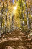 Goldener Oktober und Herbst im Buchenwald mit Sonnenstrahlen - 177013678
