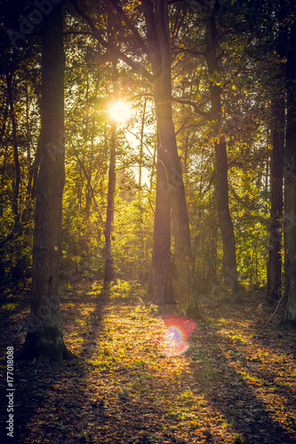 Aluminium Betoverde Bos Wald mit Sonne