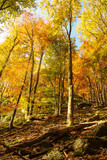 autumn landscape with a rock - 177019214