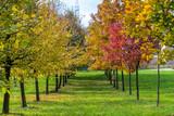 Pochmurny jesienny dzień w parku - 177019613