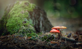 Two mushrooms near a stump in the forest - 177029648