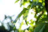 Frische Blätter im Sonnenschein - 177039458