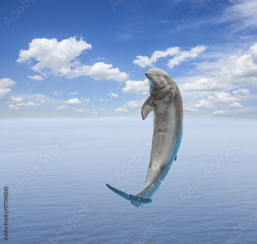 Fototapeta single jumping smiling dolphin, beautiful seascape with deep ocean waters and cloudscape