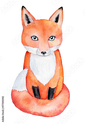 Cute fox watercolor illustration, isolated on white background. Seated, looking forward, full length, bright red orange color, blue eyes. Can be used for postcard, fabric, invitation, book decoration. - 177043042