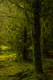 Trees covered with moss and lichen - 177050646