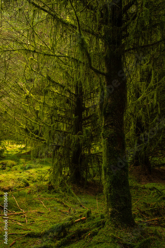 Trees covered with moss and lichen