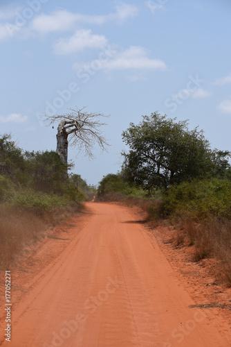 Papiers peints Baobab Quiçama, or Kissama, National Park