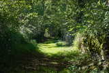 Green footpath and lush foliage in the French countryside, Mortemart, Haute-Vienne, Limousin - 177058044