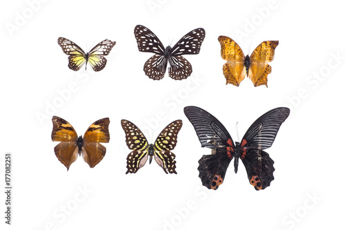 collection of butterflies on white isolated background плакат