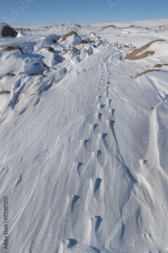 Footprints covered with snow, the Imperial penguin. Antarctic
