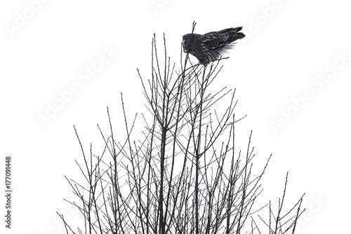Papiers peints Herbe owl
