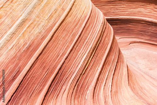 Papiers peints Corail The Wave