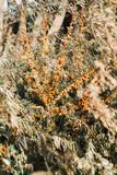 Autumn bushes - 177101644