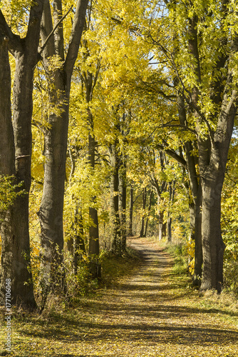 autumn tree array