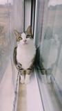 Gato atigrado reflejado en una ventana  - 177109073
