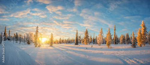 Papiers peints Photos panoramiques Snowy landscape at sunset, frozen trees in winter in Saariselka, Lapland, Finland