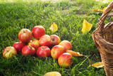 Heap of Red Apples in the Grass.