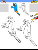 drawing and coloring activity with macaw bird - 177134255