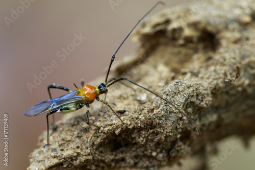 Image of an Assassin bug on nature background. Insect. Animal Poster
