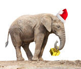 African elephant with santa's cap delivering christmas gifts. - 177162837