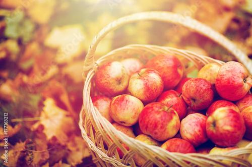 Fridge magnet wicker basket of ripe red apples at autumn garden
