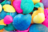 Vibrant Multicolored Seashells - 177167833