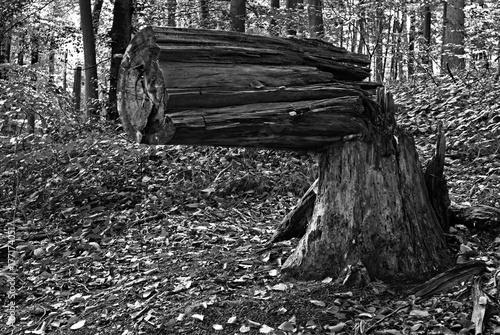 Papiers peints Gris traffic Ein abgeknickter Baum in Form einer Waffe