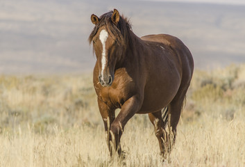 Wild Horse in Wyoming