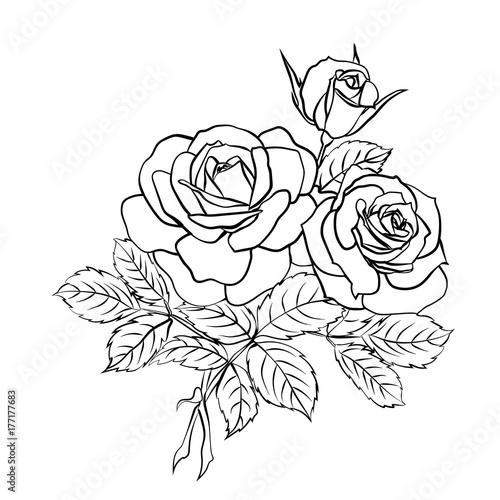 Fridge magnet Rose sketch on white background