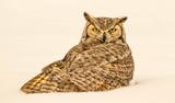 Winter Owl - 177212817