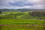 Green rolling hills in Northern California - 177219037