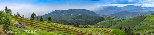 Sticker Rice Terraces