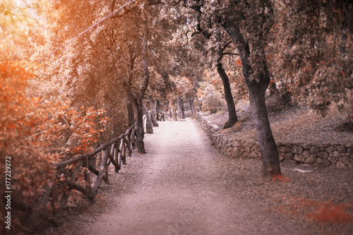 Fridge magnet Path in the autumn forest