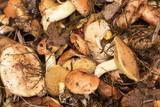 Forest mushrooms - 177237627
