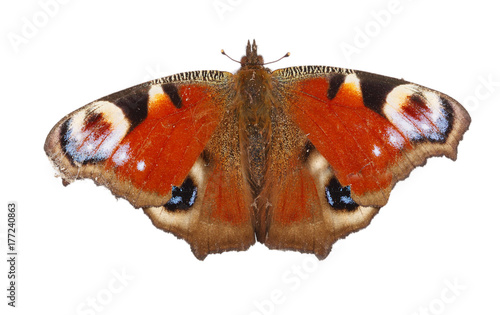 Fotobehang Vlinder European Peacock butterfly isolated on white background. Top view