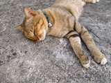 Cat lying on a cement floor. - 177244097
