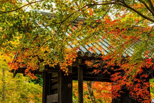 秋月の紅葉 © 雄司 北山