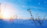 art snowy winter landscape; frozen field; ice and snow - 177260444