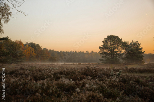 Sonnenaufgang mit Nebel im Wald - foggy sunrise in the forest