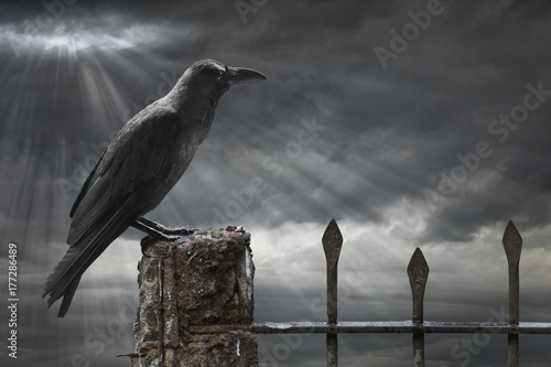 Crow with stormy background Poster