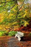 Ein Plätzchen im Herbstwald