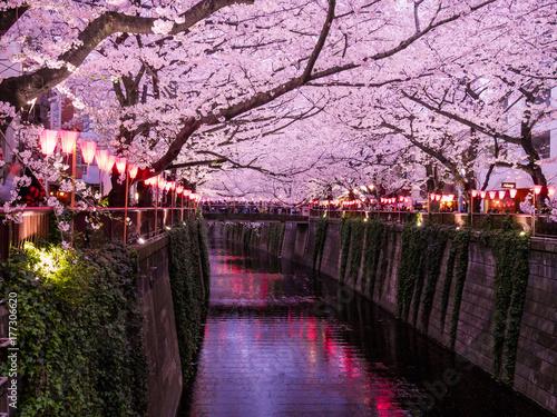 Deurstickers Purper Festival des Cerisers en fleurs, au canal de Meguro à Tokyo, Japon.